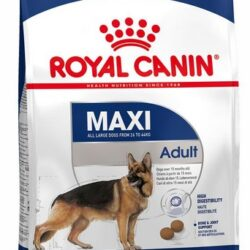 Royal Canin Maxi Adult karma sucha dla psów dorosłych, do 5 roku życia, ras dużych 15kg-1
