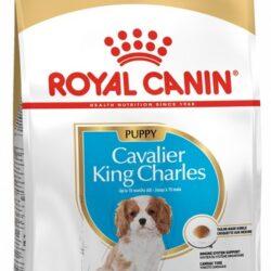 Royal Canin Cavalier King Charles Puppy karma sucha dla szczeniąt do 10 miesiąca, rasy cavalier king charles 1,5kg-1