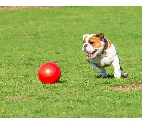 "Boomer Ball XL - 10"" / 25cm czerwona-5"