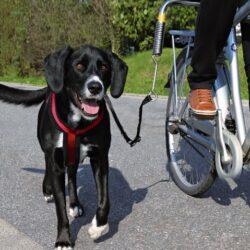 Trixie Smycz do roweru [1287]-1