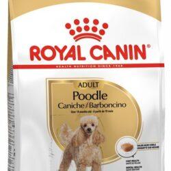 Royal Canin Poodle Adult karma sucha dla psów dorosłych rasy pudel miniaturowy 1,5kg-1