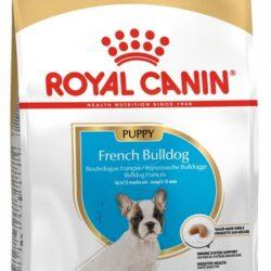 Royal Canin French Bulldog Puppy/Junior karma sucha dla szczeniąt do 12 miesiąca, rasy buldog francuski 3kg-1