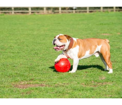 "Boomer Ball XL - 10"" / 25cm czerwona-6"