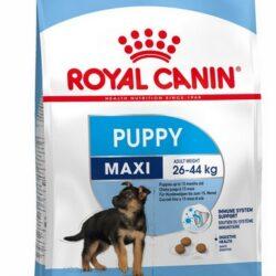 Royal Canin Maxi Puppy karma sucha dla szczeniąt, od 2 do 15 miesiąca życia, ras dużych 15kg-1