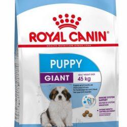Royal Canin Giant Puppy karma sucha dla szczeniąt, od 2 do 8 miesiąca życia, ras olbrzymich 15kg-1