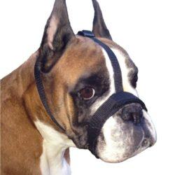 Grande Finale Kaganiec dla psa pekińczyk rozmiar 6 (33-36cm)-1