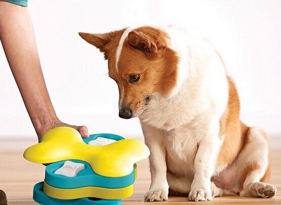 zabawki interaktywne dla psa