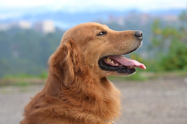 domowe sposoby na kamień nazębny u psa